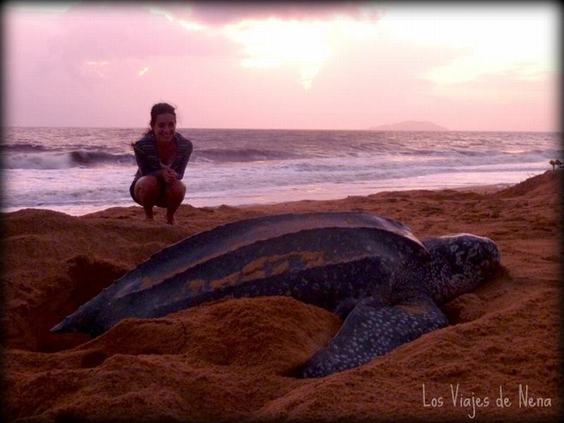 Laura Lazzarino y Tortugas marinas en Guyana Francesa