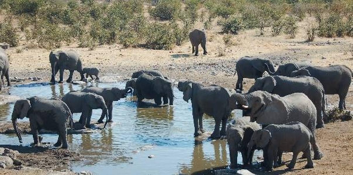 Elefantes en Etosha, Park Namibia
