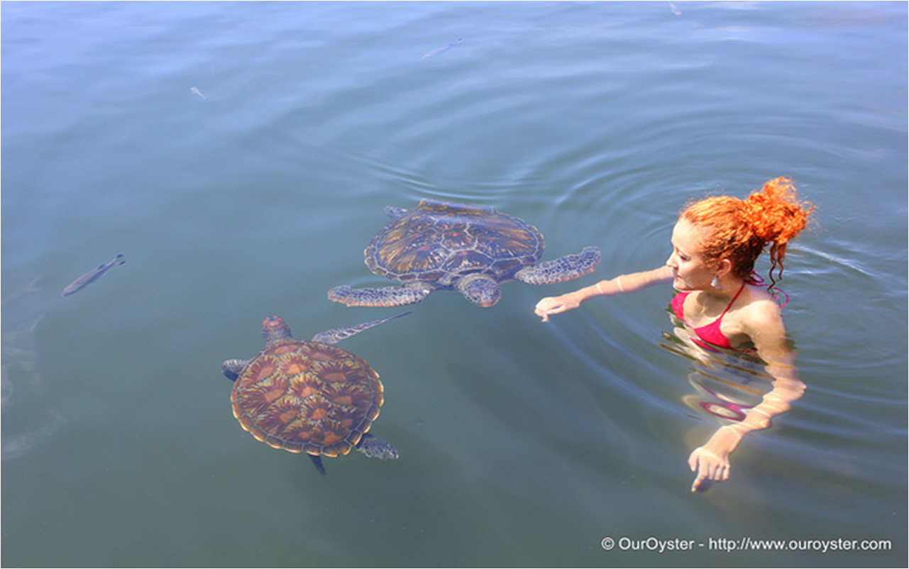 Swimming with turtles in Samoa. Picture taken by Our Oyster