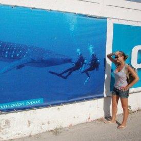 Holbox: Tiburones Ballena