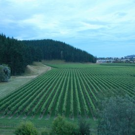 Napier Wineries