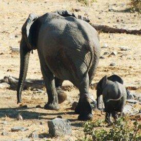 Chiang Mai: bambú rafting y paseo en elefante