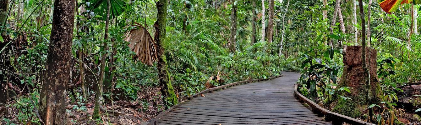 Botanical Walk