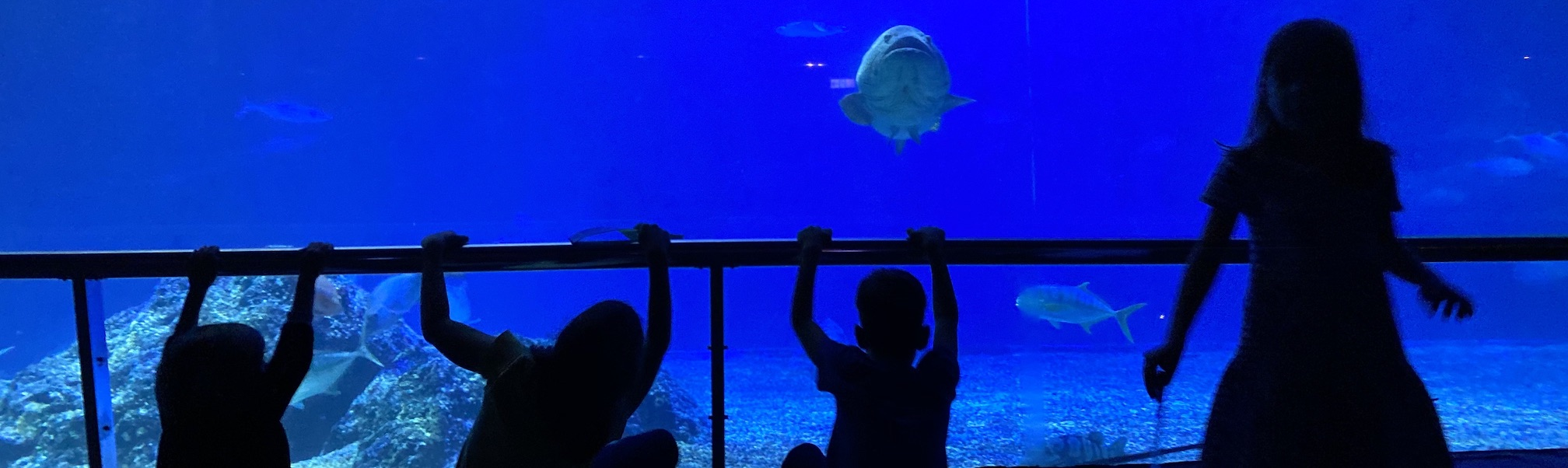National Museum of Marine Biology & Aquarium