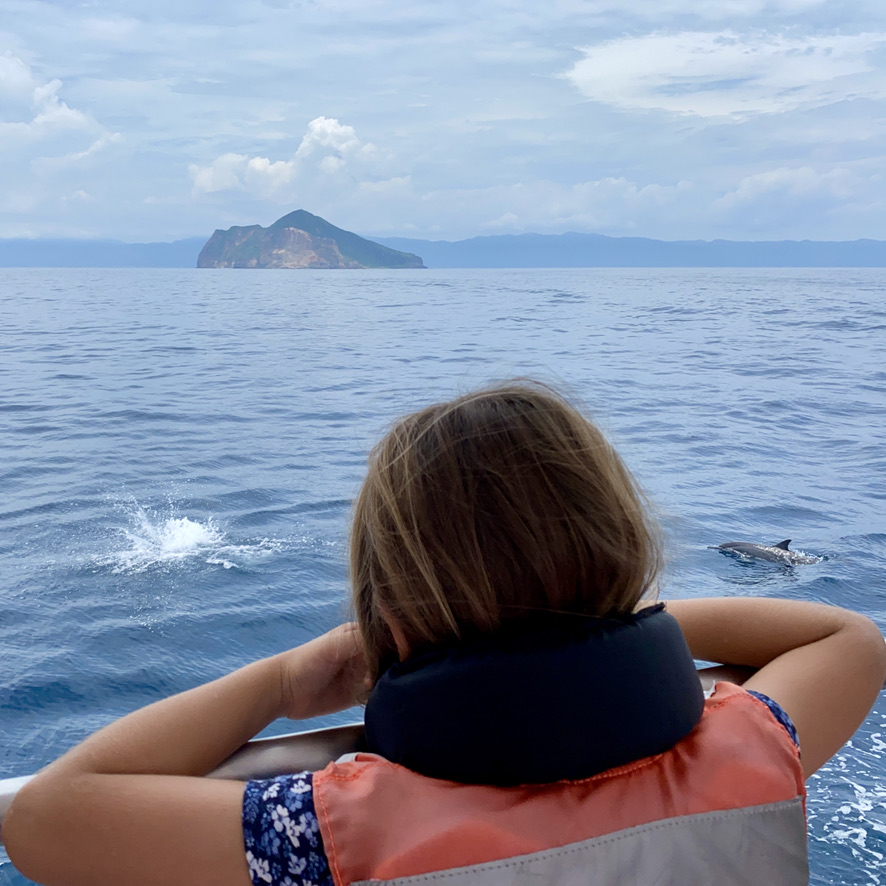 Dolphins in Turtle Island