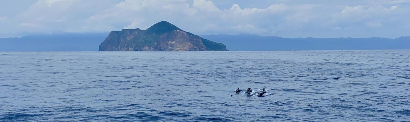 Delfines en Turtle Island