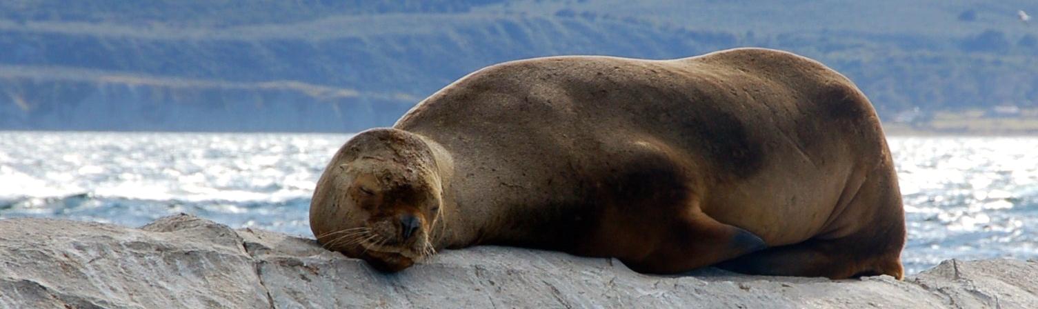 Canal de Beagle, Ushuaia, Argentina